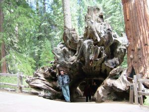 June 2005: San Diego & Sequoia National Park in CA