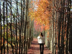 Terri enjoys a quiet stroll amongst the foliage of the Grounds' Red Maple Allee