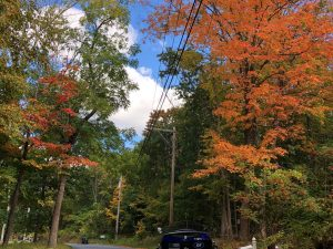 Leaves changing in upstate NY - September 2020